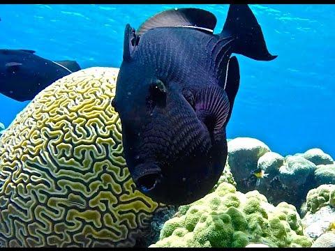 Snorkeling Grand Cayman Eden Rock