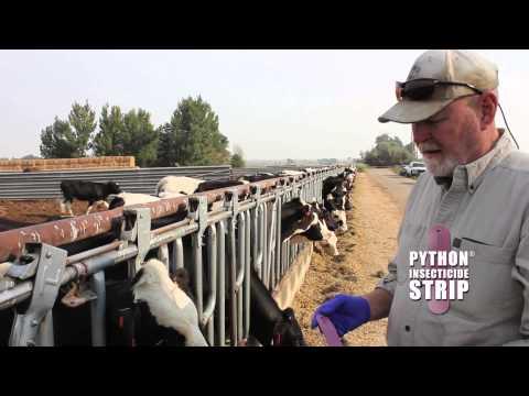 Y-Tex Corporation PYthon Strips