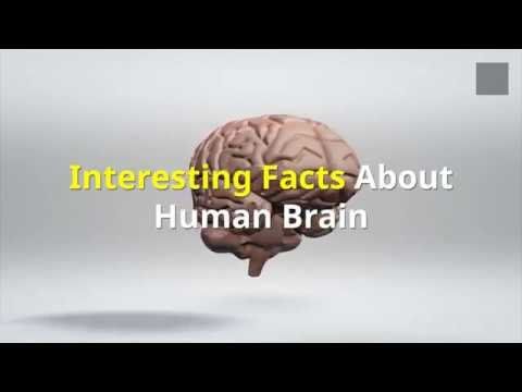 Interesting Facts About Human Brain You Might Not Know!