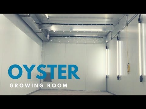Exotics - Scaling up with an Oyster Growing Room