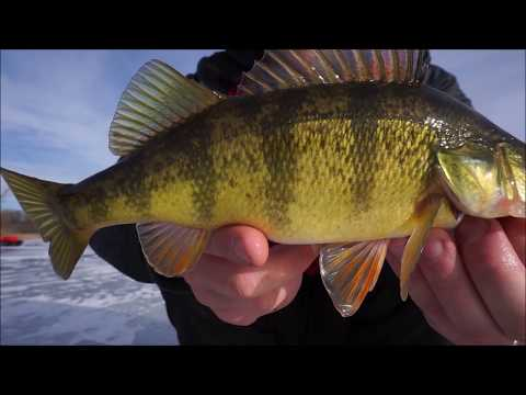 EARLY ICE FISHING FOR PERCH AND BLUEGILL!