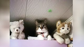 Life is much different with PETS - Funniest selection!