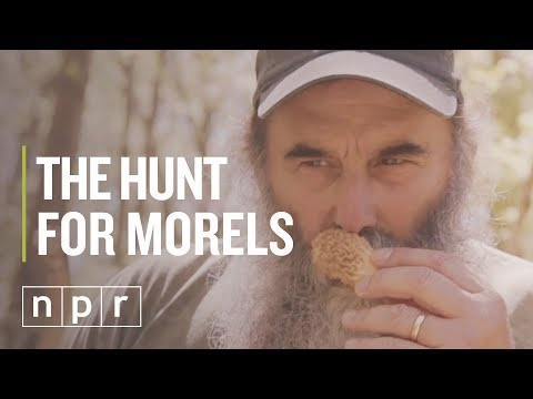 How To Find Morels | The Salt | NPR
