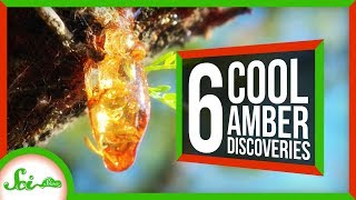 6 of the Coolest Things We've Found in Amber