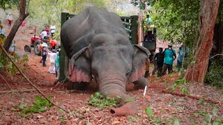 Elephant gets saved from hunters by wildlife team- Full Video