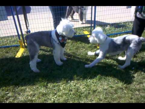 playtime at Sheepie Shindig 2015 (3)