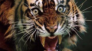 القطط القاتلة - افلام وثائقية عن الحيوانات 2014