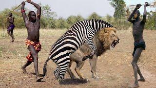 Top 10 Animals that Can KILL LIONS   Lion vs Zebra, Hippo, Human, Rhinoceros, Giraffe, Python