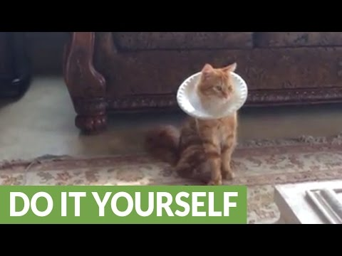 Cat models DIY paper plate e-collar