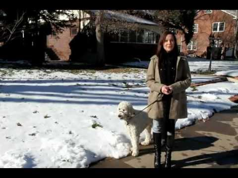 Winter Care Tips for Pets - Cold Weather Care for Dogs and Cats
