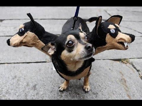 Собаки, очень смешное видео!