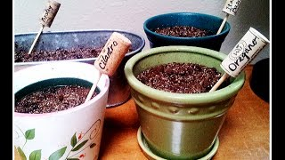 How To Grow Herbs In Containers Indoors Cilantro Basil Oregano Parsley