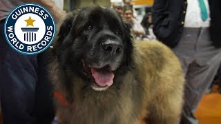 Hagrid: Record Catching Dog! - Meet The Record Barkers