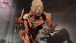 Download Real Bodies Museum Exhibit Review - Warning! Real Preserved Human Specimens in ! Video