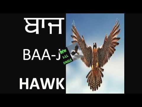 Learn Punjabi । USA Kids । youtube classes । must watch । India । BIRDS