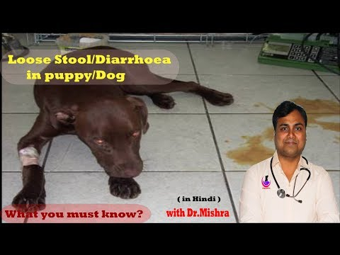 Loose motion/Diarrhoea in Dog or Puppy: What you need to know ( Pet Care )Hindi