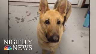 Stolen Dog Found Two Years Later Thanks To Microchip | NBC Nightly News