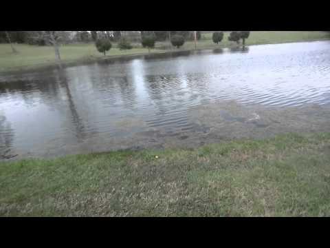Algae invading a pond nutrient overload