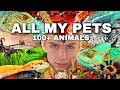 All My Pets | 100+ Animals (BEST ONE YET)
