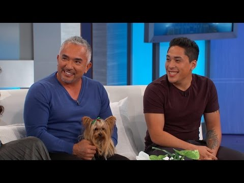 Cesar Millan Answers Your Dog Questions