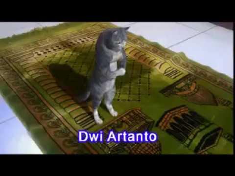 Cat Pray Namaz