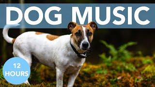 DOG MUSIC! Soothing Songs Guaranteed to Help Your Dog Sleep!