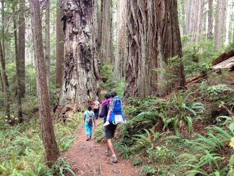 Best Hike in Redwood National Park
