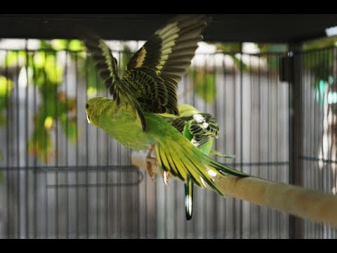 Finches living with Parakeets?