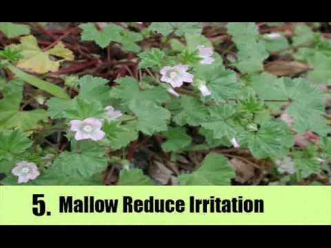6 Herbs For Eye Irritation
