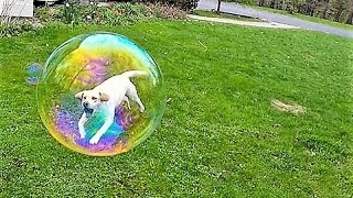 27 Perfectly Timed Photos