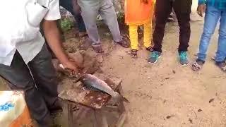 Telangana Fisheries - Training in Fish Dressing -Nizamsagar Catchment Area S2 (2017-18)