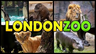 LONDON ZOO 4K