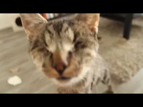 Blind Cat Bamboo - Tricks and play time!