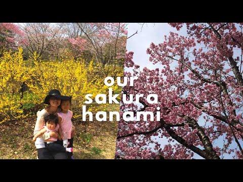 Japan Vlog: Cherry Blossom Picnic (Sakura Hanami) in Showa Kinen Koen, Japan