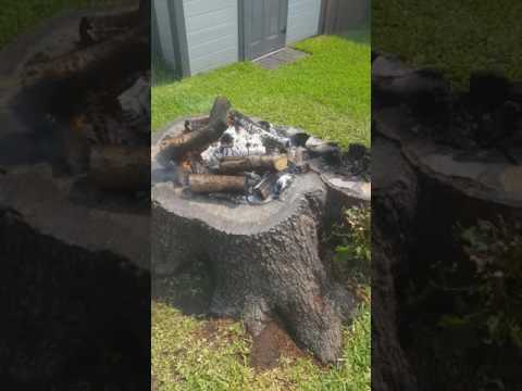 Burning out my tree stump and making a flower bed out of it!