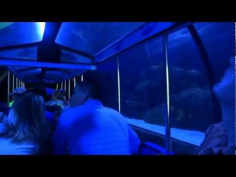 2012 Shark Voyage Adventure Train at Houston's Downtown Aquarium