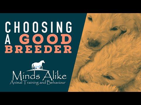 Minds Alike - Choosing A Good Breeder