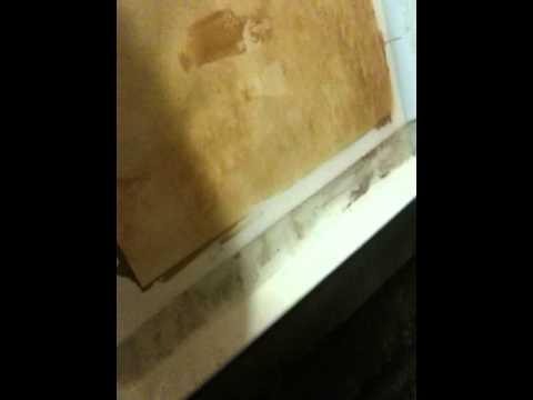 Vandyke brown printing 2