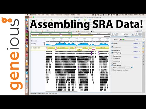 Blasting HiSeq data in Geneious to find mitochondrial reads (Part 4)