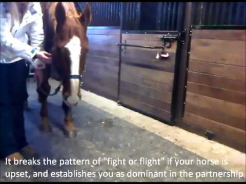 How to Teach a Horse to Relax
