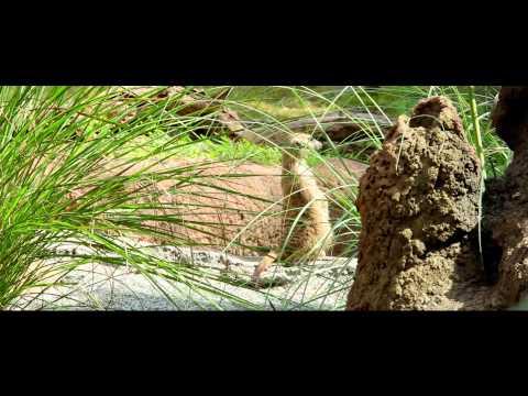 Biodiversity is us - educational film - 13 mn