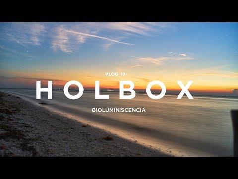 Isla Holbox y sus playas luminiscentes bioluminiscencia y estrellas 🌟