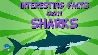 Interesting facts about Sharks | Educational Video for Kids.