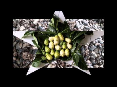 Selling and Export Noni, Dried Noni, Noni Powder and Noni Juice