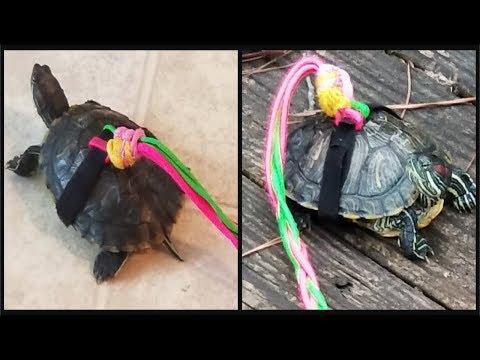 How to Make a Turtle Leash