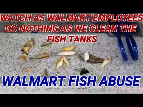 Walmart fish abuse part 1. FISH ABUSE