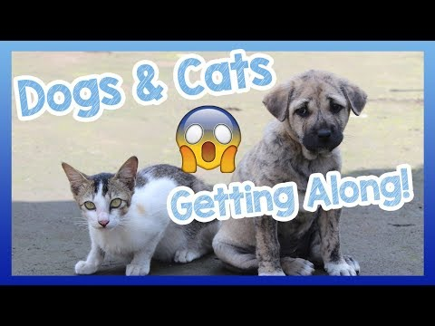 Dogs and Cats! Build a Relationship Between Cats and Dogs! How to Make Dogs and Cats Be Friends? 🐶😺