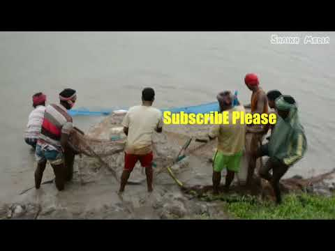 Fish Catching Video | Amazing Fishing in Pond | Fish catching in River | Fishing in Bangladesh
