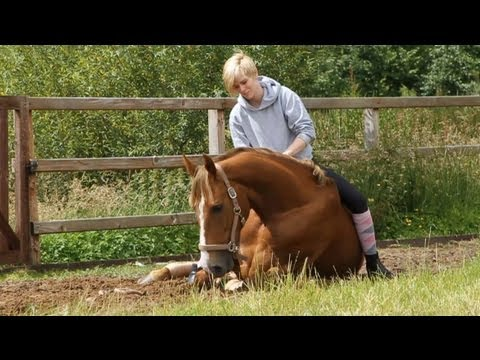 How to lay down your horse without ropes