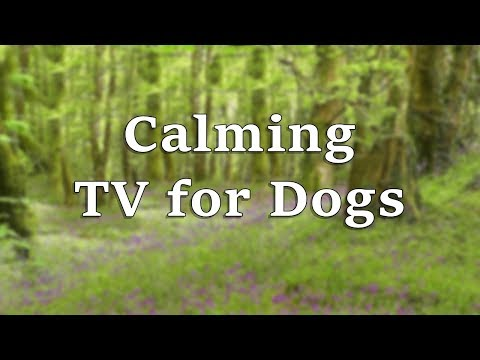 Dog TV : Calming TV for Dogs - Bluebell Meadow